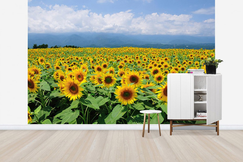 (PHOTOWALL / Sunflowers in Sunny Weather)
