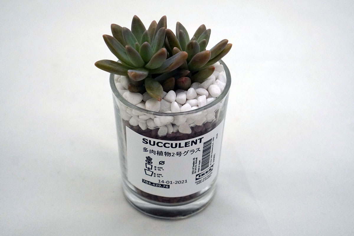 IKEA SUCCULENT 鉢植え