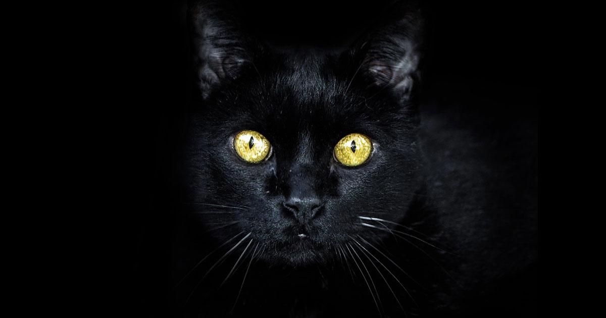 臆病な僕は「結果を見る」ことが怖かった。猫が教えてくれた向き合う勇気