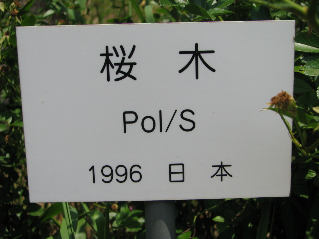 f:id:sakura-works:20170615205748j:plain