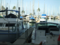 海辺にヨットが密集してます