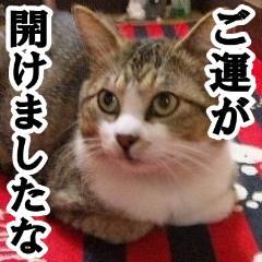 f:id:sakura_9_go:20201026032731j:plain