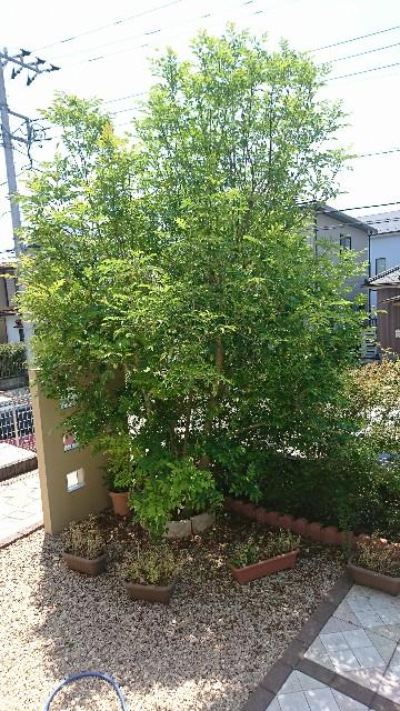 f:id:sakura_onee:20170521140929j:image