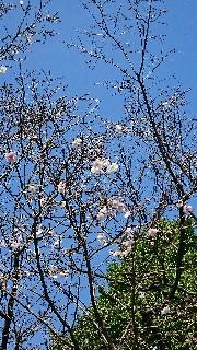 f:id:sakura_onee:20171001182428j:image