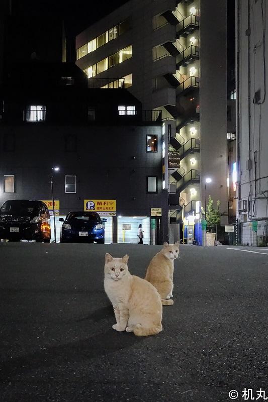 f:id:sakura_tukue:20211009161102j:plain