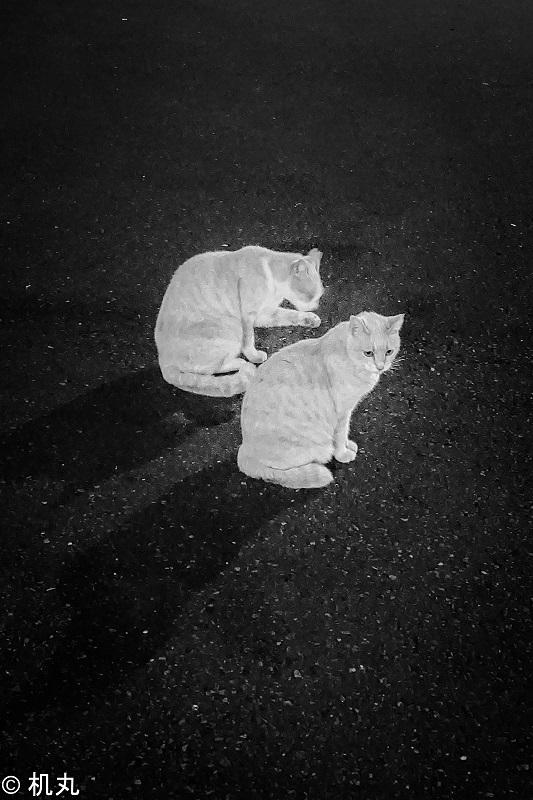 f:id:sakura_tukue:20211011021139j:plain