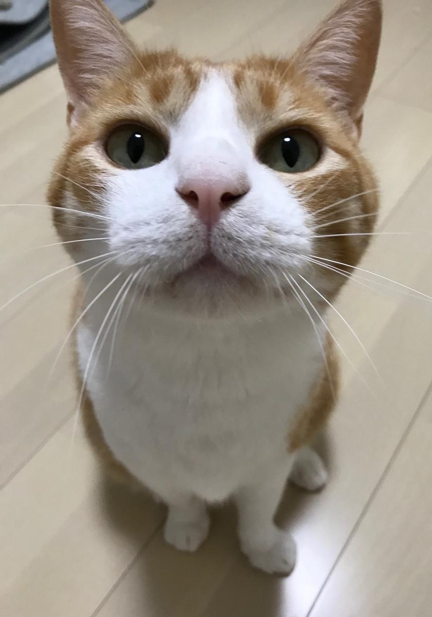 f:id:sakurabiyori-ah:20190905222421j:plain