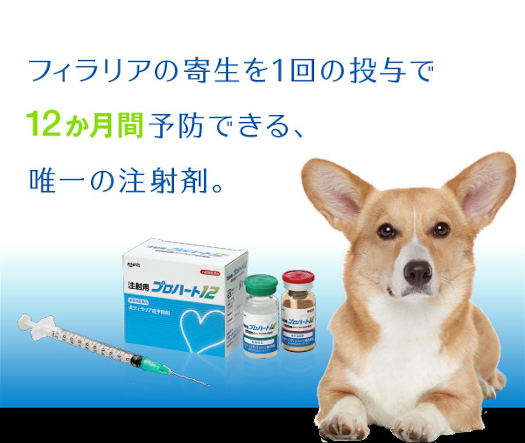 f:id:sakurabiyori-ah:20200524195842p:image