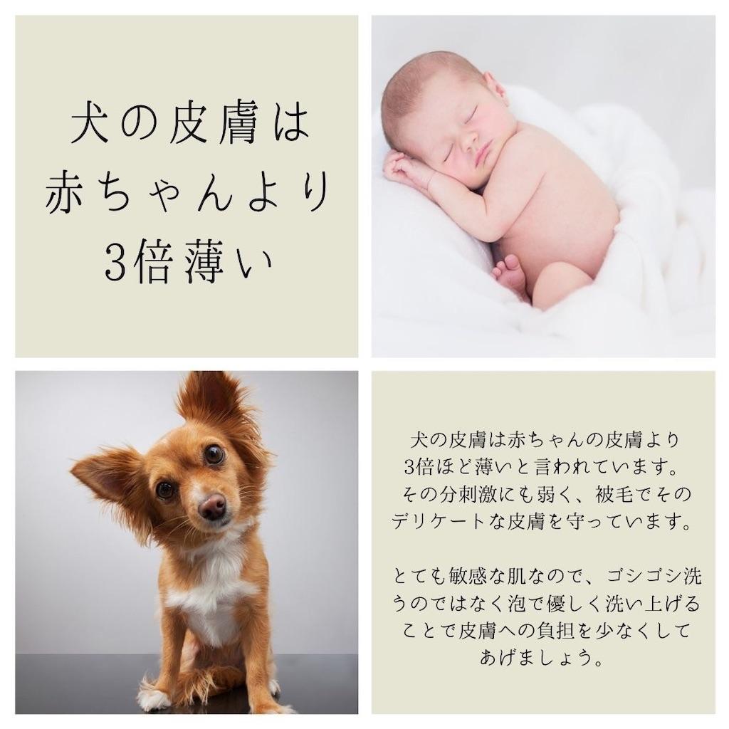 f:id:sakurabiyori-ah:20210427234309j:image