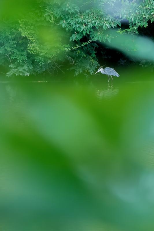 『京都新聞写真コンテスト 嵯峨野を歩く』
