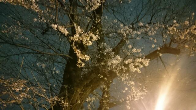 f:id:sakurafubukimau:20190324173750j:image