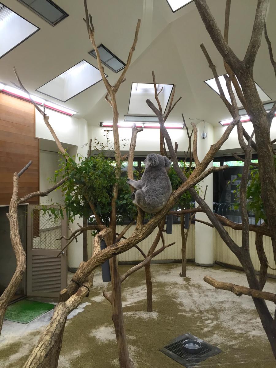 こども動物自然公園コアラ