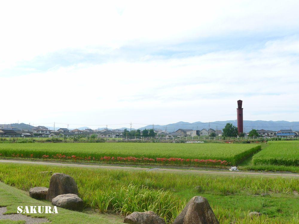 f:id:sakuraho:20161002193117j:plain