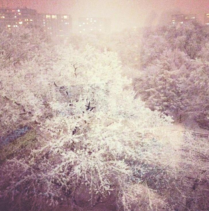 f:id:sakurai_mari:20170129015145j:plain
