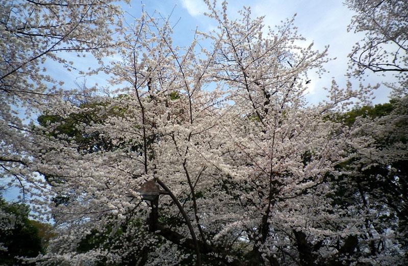 f:id:sakurairo270:20190319104846j:plain