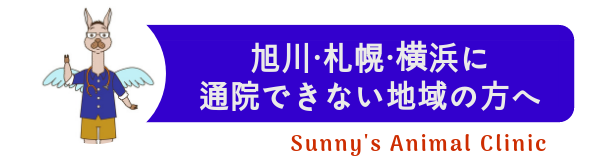 札幌横浜旭川に通院できない地域の方へサニーズアニマルクリニック