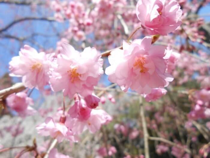 f:id:sakurako-blog:20200411224237j:plain