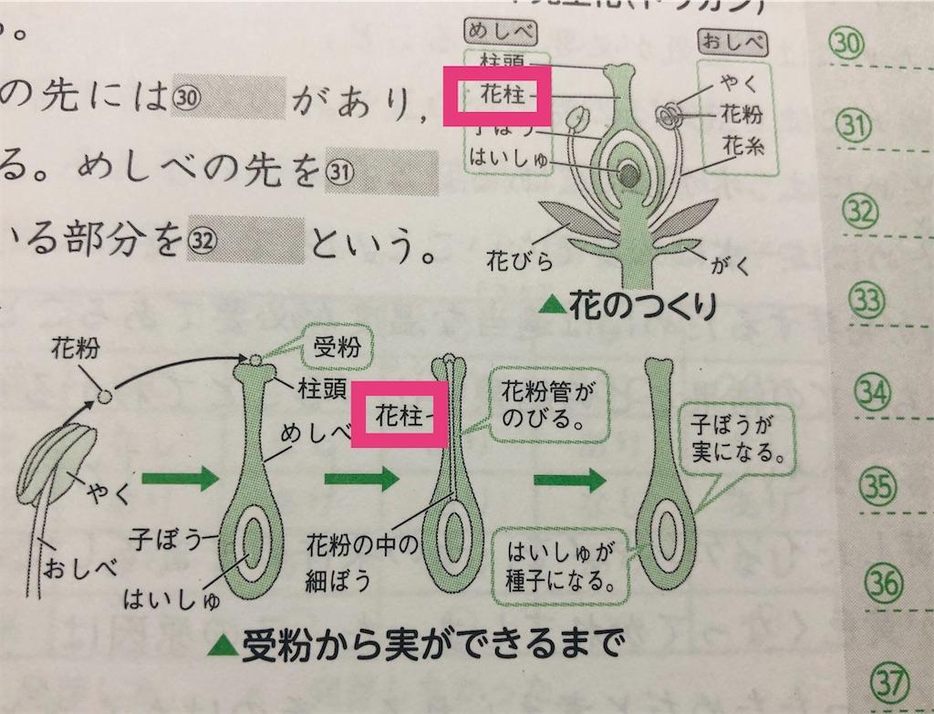 f:id:sakurako-tulipko:20210102123052j:plain