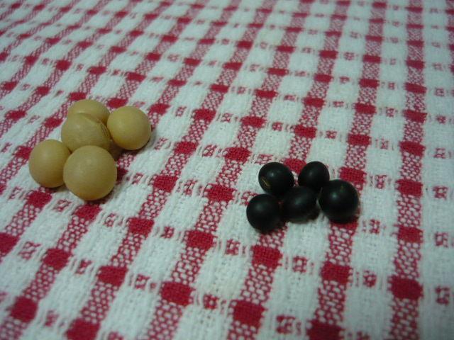 千石黒豆、抗酸化力、ポリフェノール