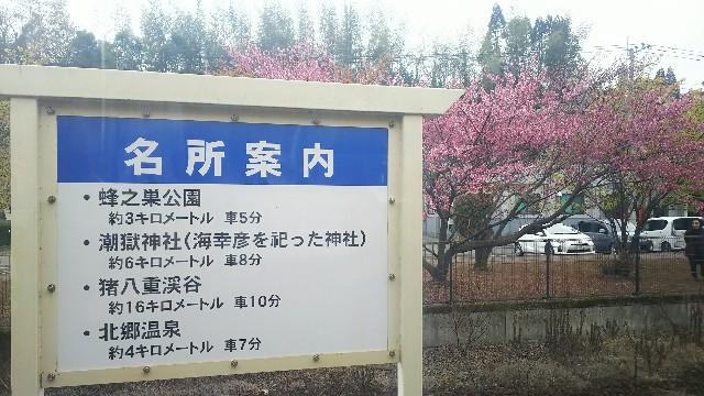 f:id:sakuramaru-japan:20190228131721j:image