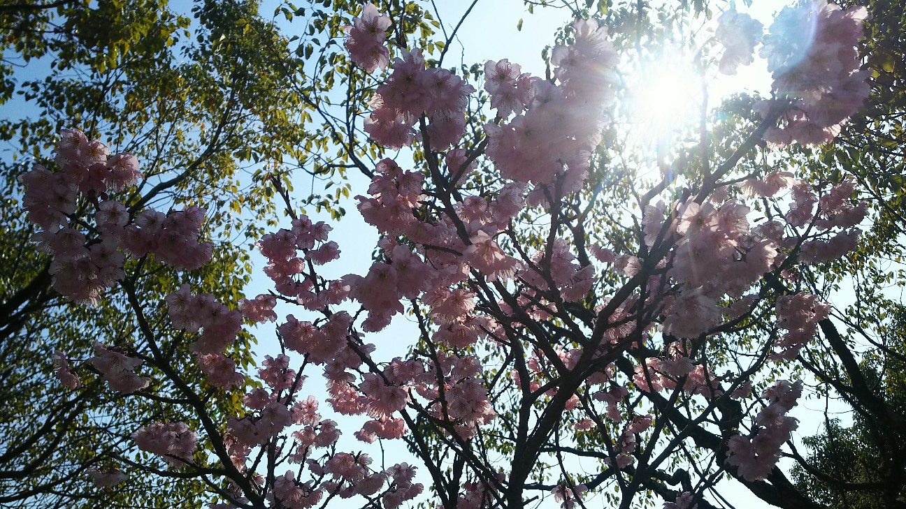 f:id:sakuramaru-japan:20200115223223j:image