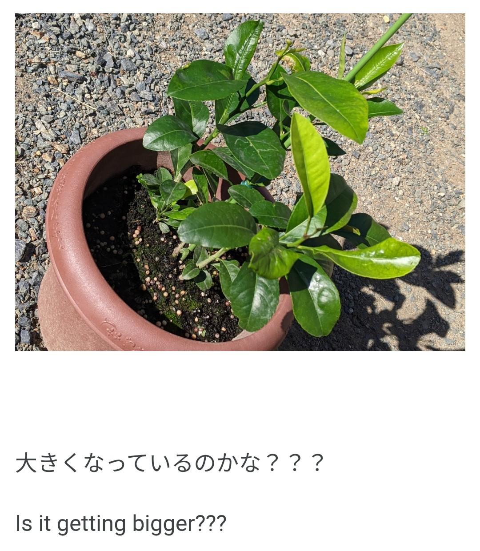 f:id:sakuramaru-japan:20201111154757j:image