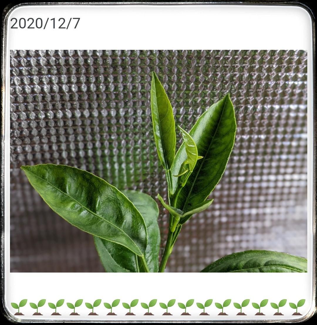 f:id:sakuramaru-japan:20201211161519j:image