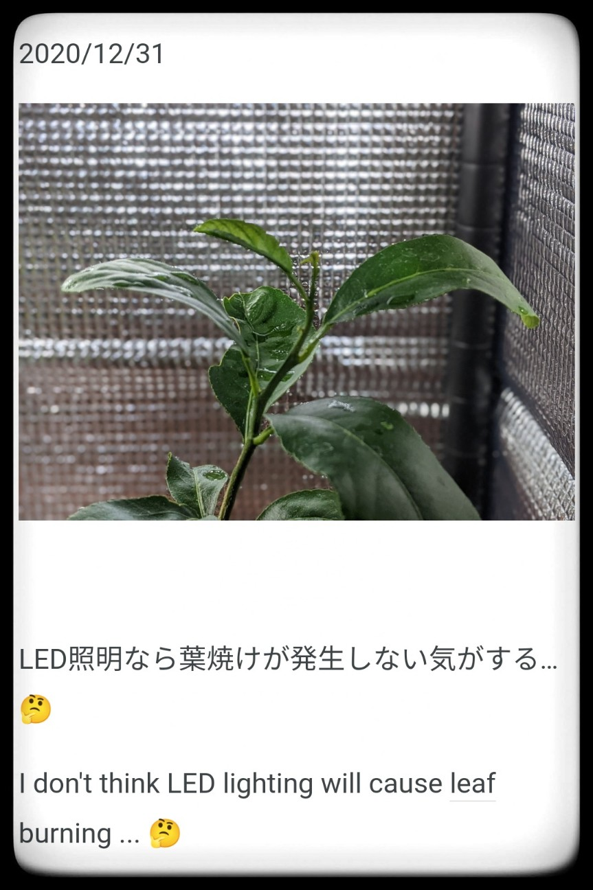 f:id:sakuramaru-japan:20210107114828j:image