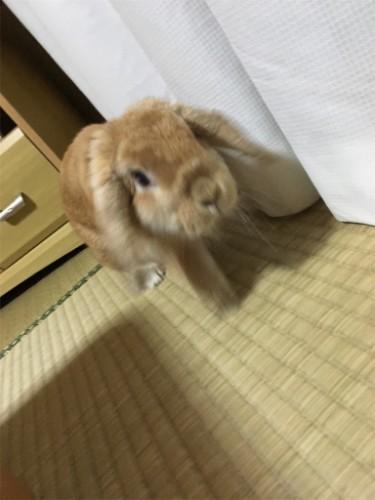 f:id:sakuramikoro:20190321230359j:plain