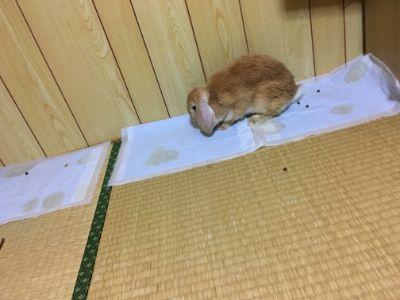 f:id:sakuramikoro:20200702211733j:plain