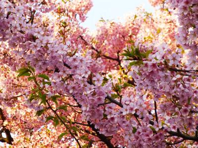 f:id:sakuramiyuki:20130315164633j:plain