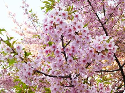f:id:sakuramiyuki:20130315164706j:plain