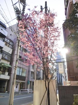 f:id:sakuramiyuki:20170322210924j:plain