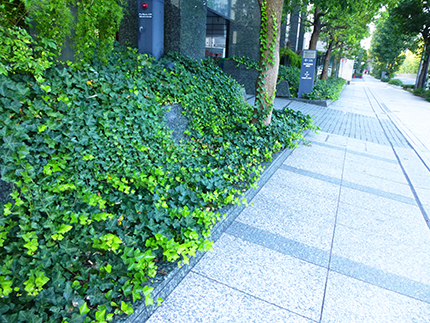 f:id:sakuramiyuki:20170915220710j:plain