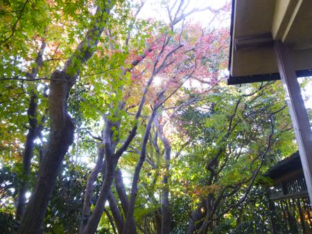 f:id:sakuramiyuki:20171124200555j:plain