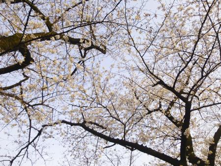 f:id:sakuramiyuki:20190328211011j:plain
