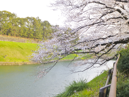 f:id:sakuramiyuki:20190328211043j:plain