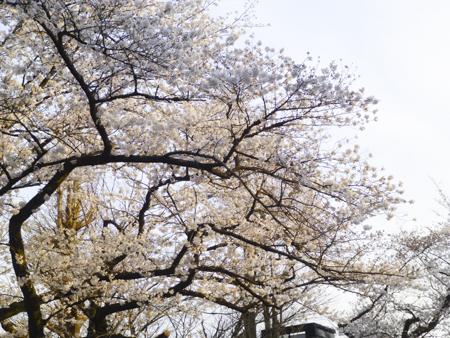 f:id:sakuramiyuki:20190329103935j:plain