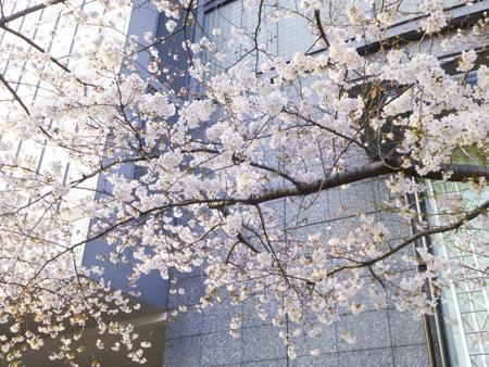 f:id:sakuramiyuki:20190329115546j:plain