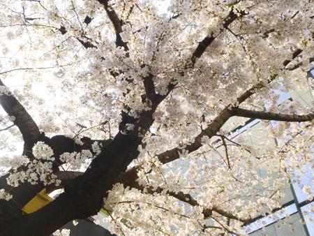 f:id:sakuramiyuki:20190329122953j:plain