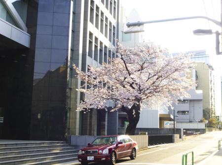 f:id:sakuramiyuki:20190329152838j:plain