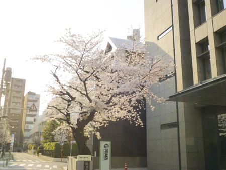 f:id:sakuramiyuki:20190329153846j:plain
