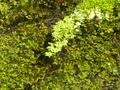 松本の水路