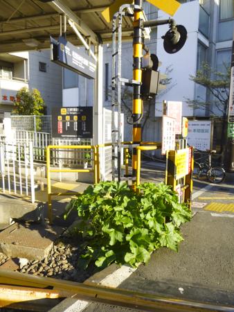 f:id:sakuramiyuki:20190426203133j:plain