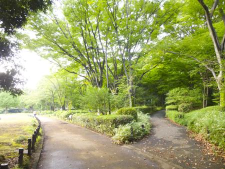f:id:sakuramiyuki:20190906112804j:plain