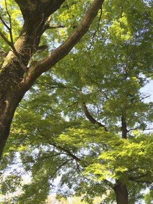 f:id:sakuramiyuki:20200421195554j:plain