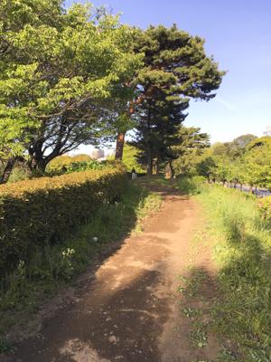 f:id:sakuramiyuki:20200421195735j:plain