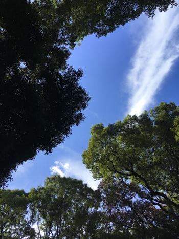 f:id:sakuramiyuki:20200911195715j:plain