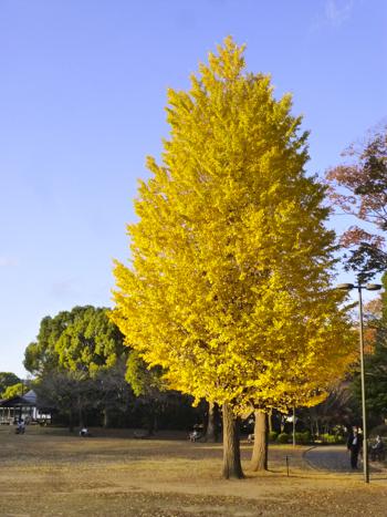 f:id:sakuramiyuki:20201127213021j:plain