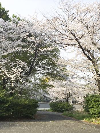 f:id:sakuramiyuki:20210330211159j:plain
